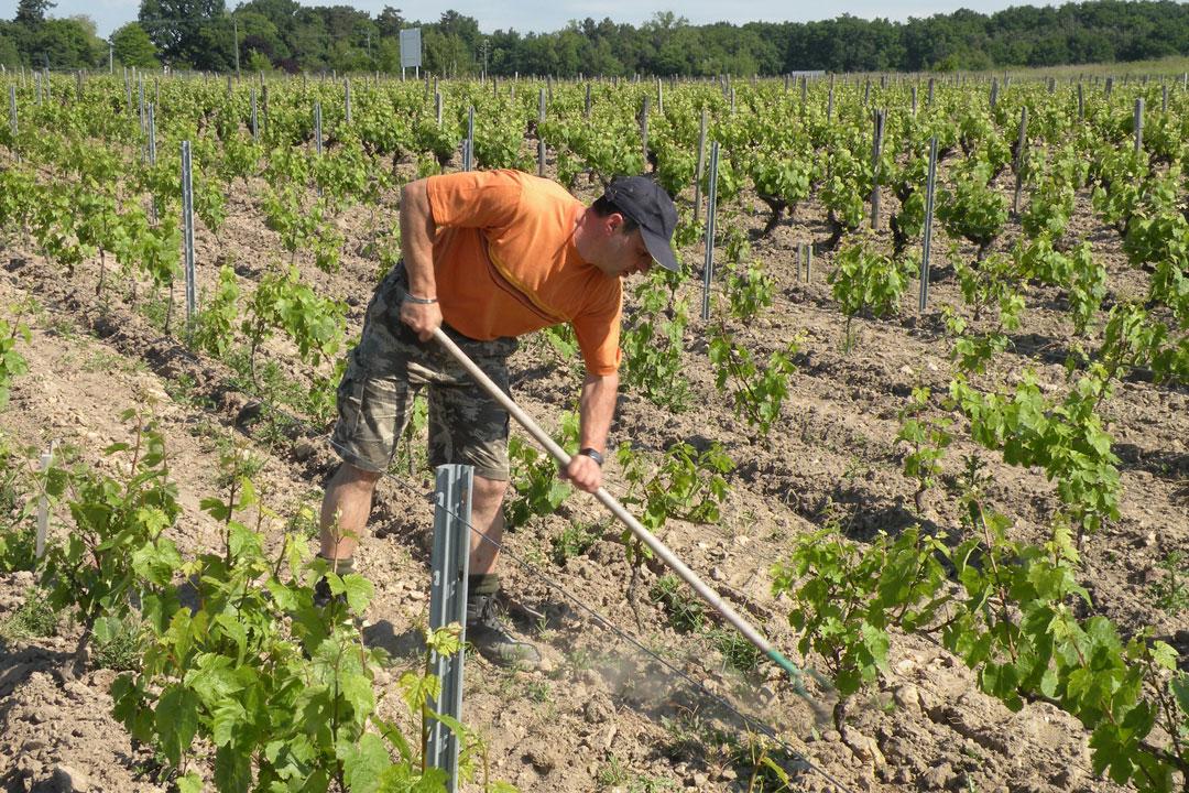 Franck Breton-Binage manuel des vignes